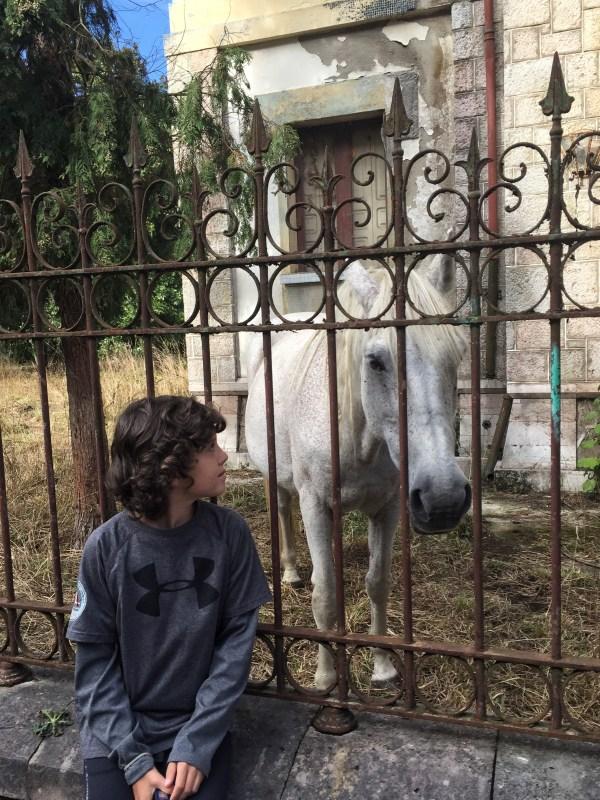 Horse roaming around at an abandoned mansion in Asturia