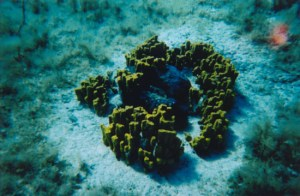 sponges in underwater Koufonissi