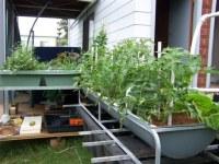 Backyard Aquaponics In Gerringong - Green-Change.com
