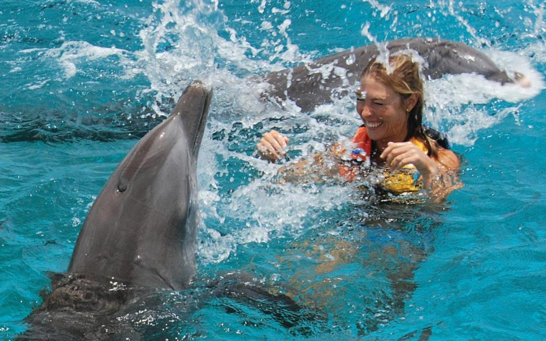 """dolphin assisted therapy The technical name for this is dolphin assisted therapy (dat) and comes from the  root word of """"animal assisted therapy"""" this is incorporating an animal into a."""