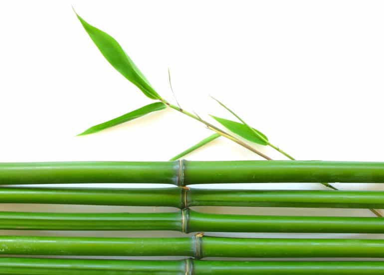 Bamboo - green building material