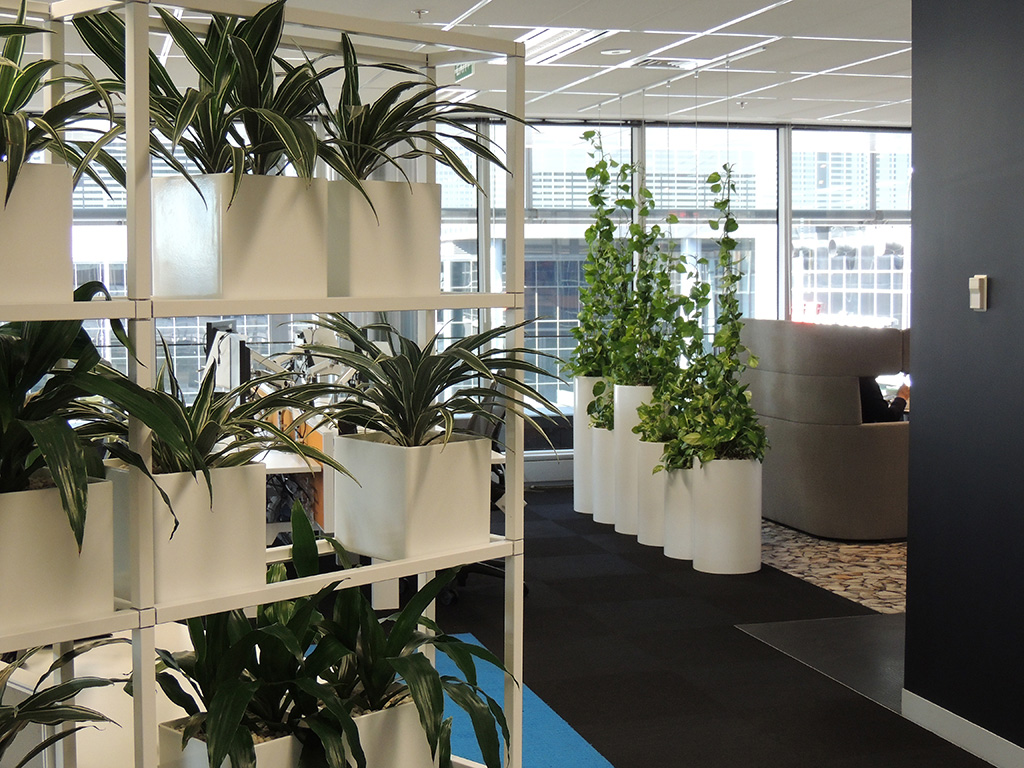 Indoor Plants For The Office Indoor Plant Hire Office Plant Hire Sydney Green Design