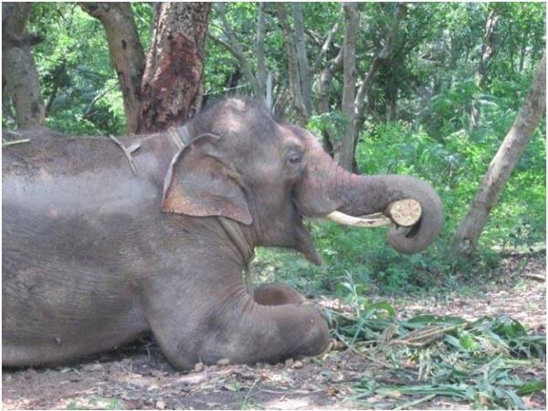 Sunder in Sanctuary