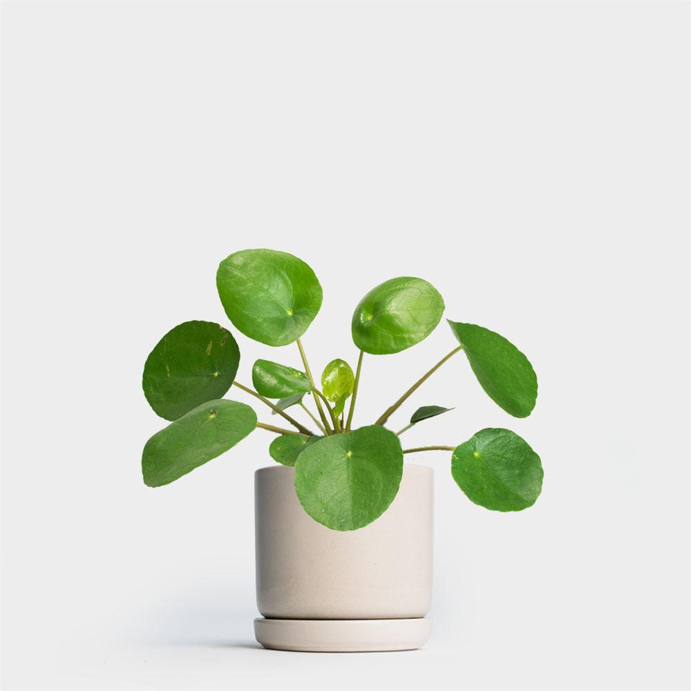 Where To Buy Indoor Plants Online Plant Delivery Nyc Greenery Nyc A Biophilic Design Company