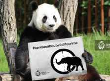 World_Wildlife_Day_2015_Panda