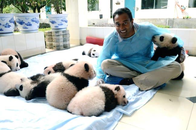 Earth_A_New_Wild_M_Sanjayan_with_baby_pandas