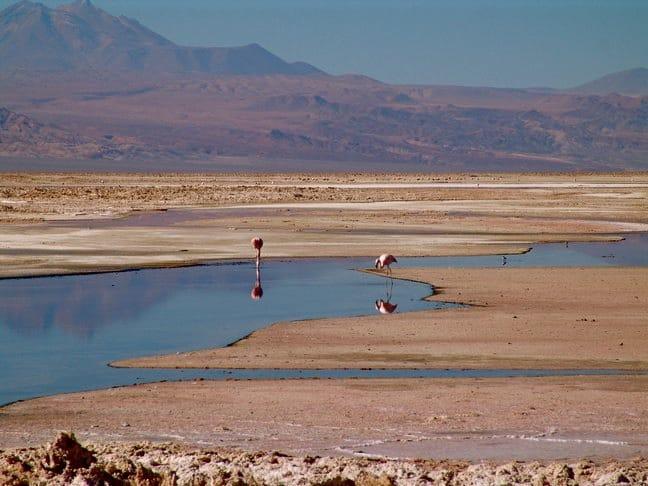 Flamingos in the Atacama Desert, Chile