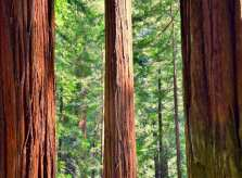 Avenue of the Giants, California Redwood Trees Scenic Drive