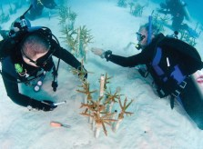 Coral_Restoration_Foundation_Nursery