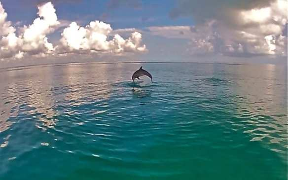 Dolphins leaping in Cancun, Mexico