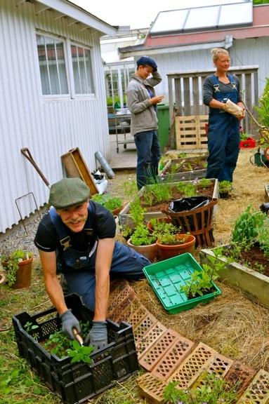 Gardening at Kosters Tradgardar (Kosters Garden) on South Koster Island, Sweden