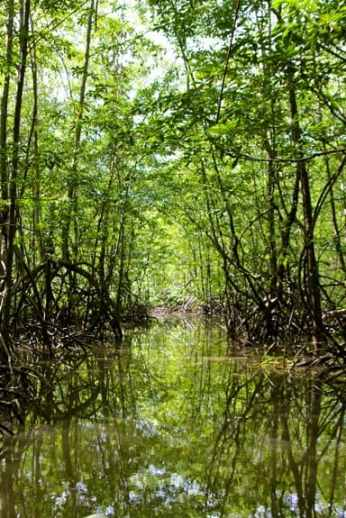 Mangroves of the Terraba Sierpe National Wetlands, Costa Rica