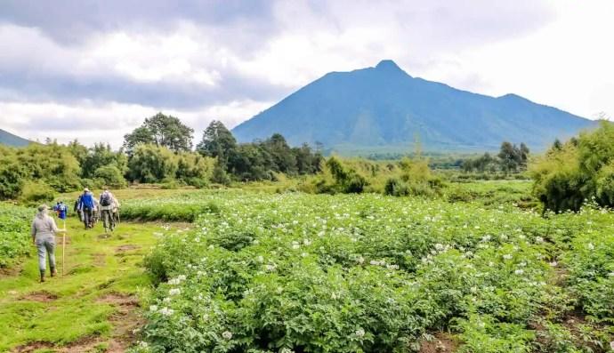 Hiking Volcanoes National Park, Rwanda