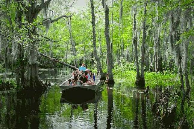 Cajun Encounters Swamp Tour, New Orleans