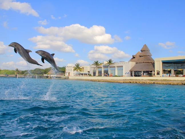 Dolphin Discovery in Cozumel
