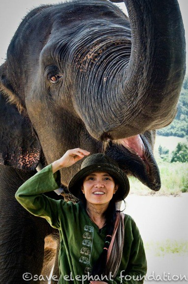 Lek Chailert of Elephant Nature Park, Thailand