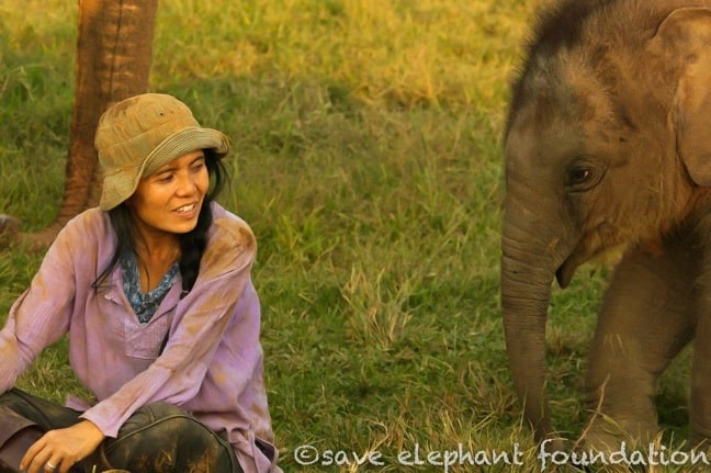 Lek Chailert of Elephant Nature Park, Thailand