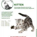 katfood-kitten