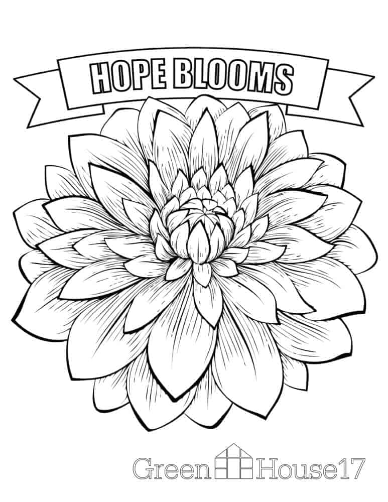 Coloring Pages - GreenHouse17