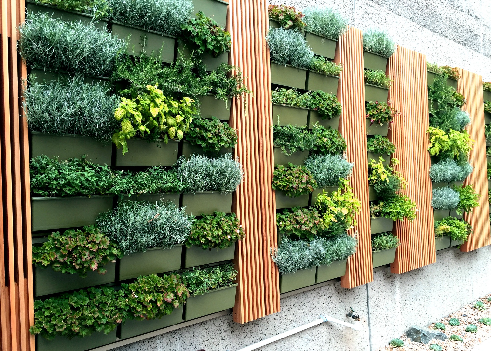 Herb Wall Residential Design Greenleaf Interior Plant Solutions