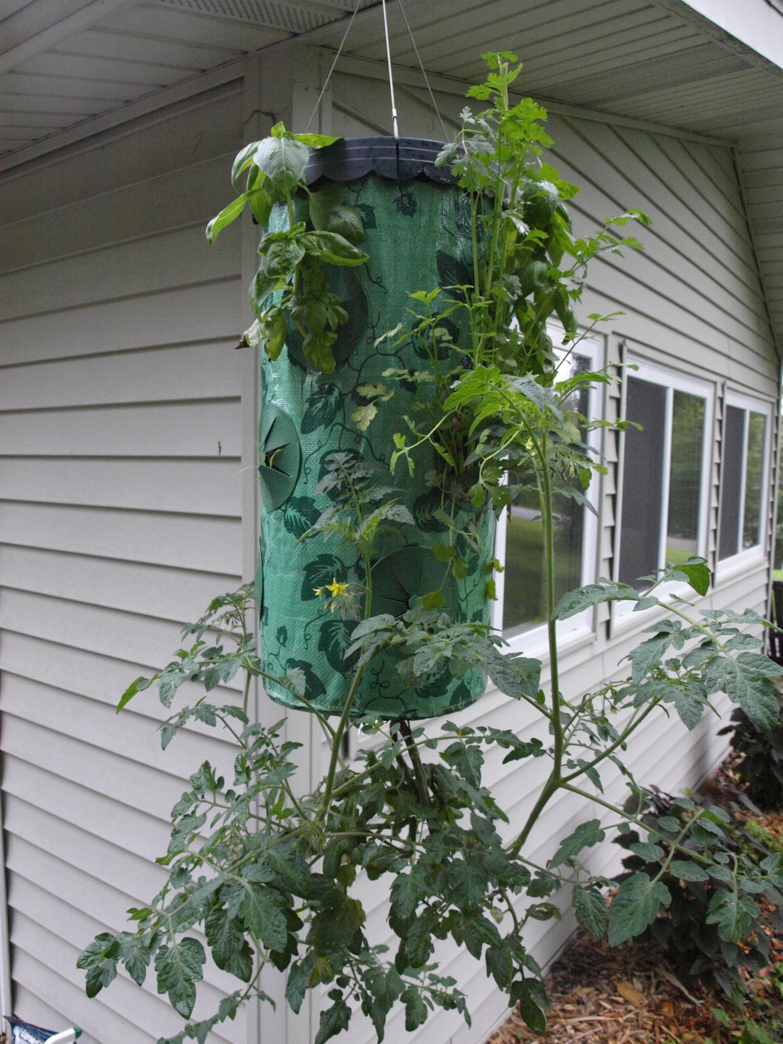 43 Luxury Patio tomato Planter Graphics