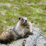 From <em>The Apartment on Market Street</em>: Groundhog