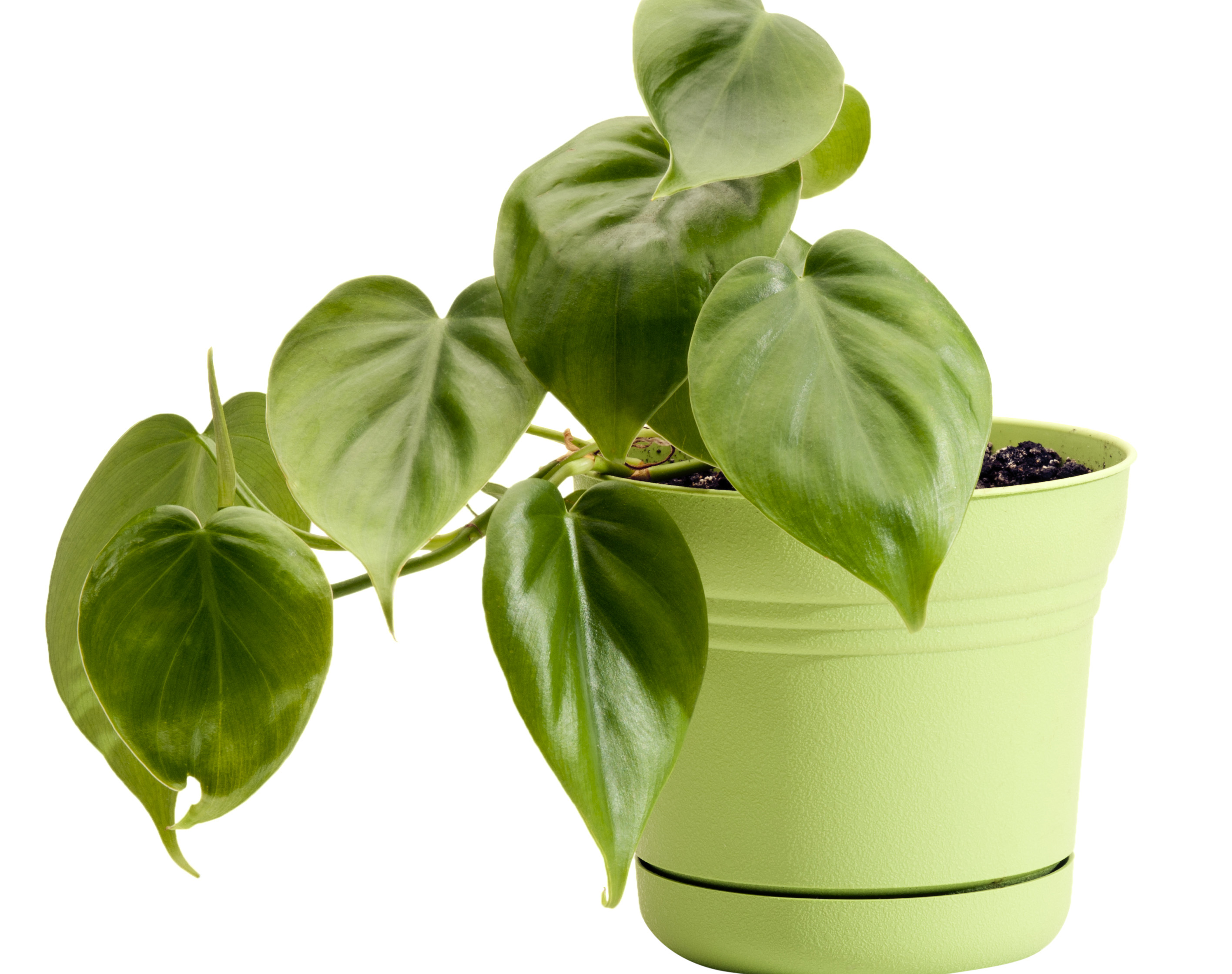 Popular Office Plants 5 Best Plants For Your Office