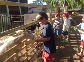 petting zoo tel-aviv