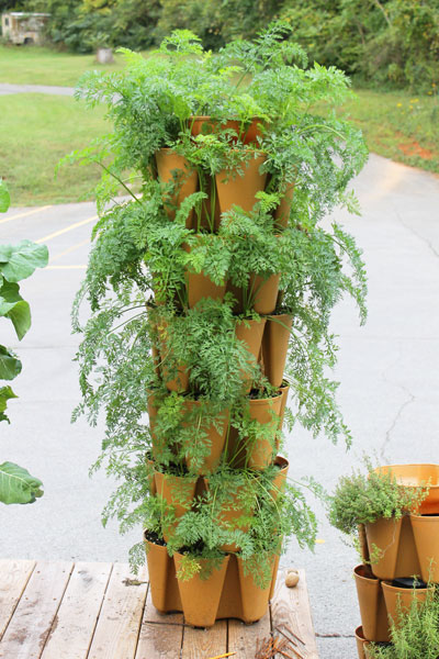 How To Grow Tons Of Carrots | Greenstalk