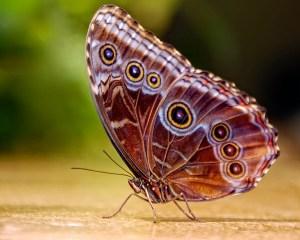 butterflies&biomimicry