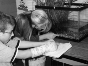 Glass shrimp investigations designed by students.