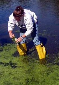 algae activity_1