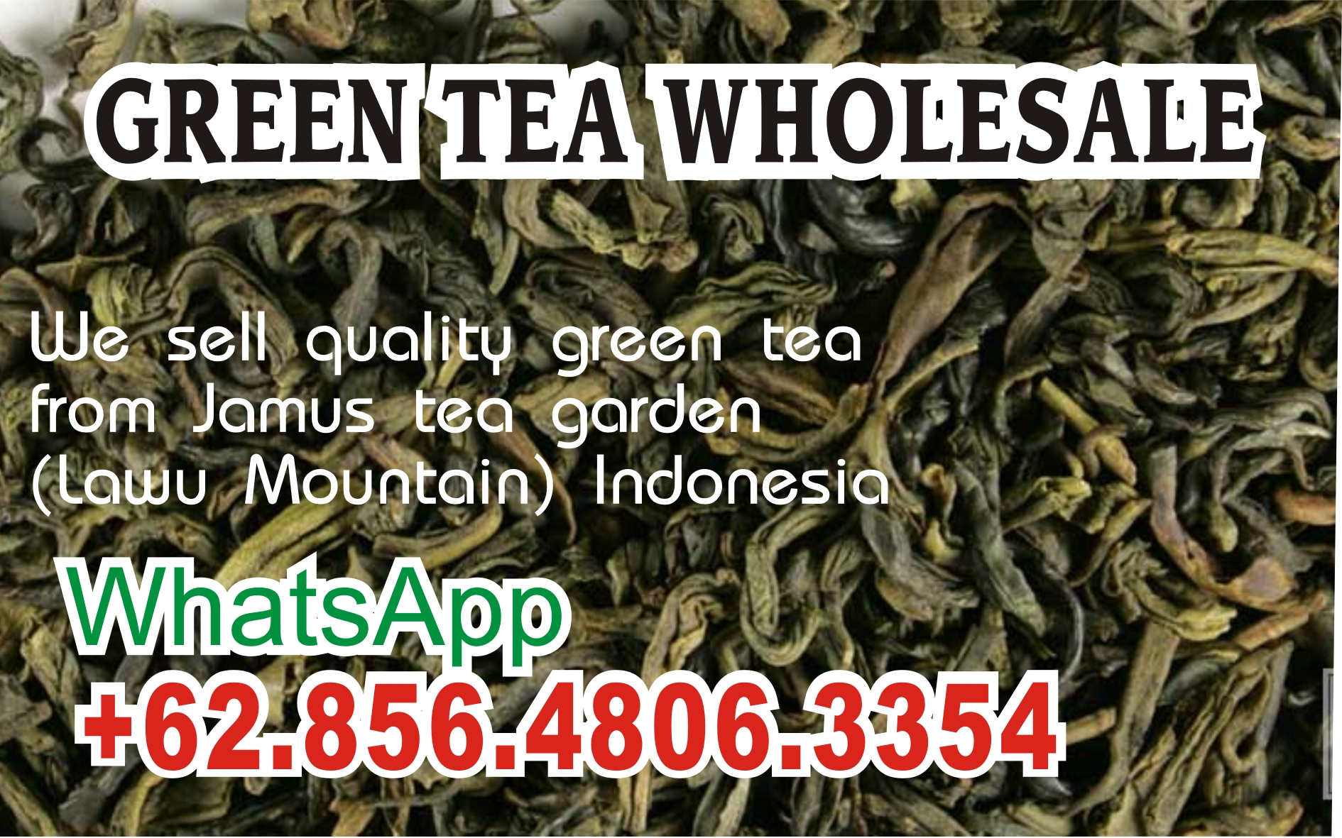Wholesale Suppliers Indonesia 6285 64806 3354 Wa Green Tea Extract Wholesale Wholesale