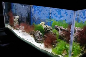 Some tips for those who are interested in maintaining aquarium:
