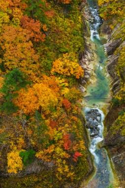 jogakura_autumn