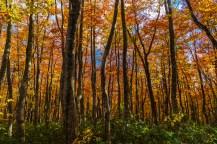 hakkoda_road_autumn
