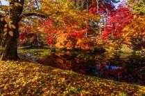 hirosaki_park_autumn