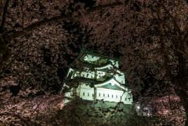 Hirosaki_park_cherry