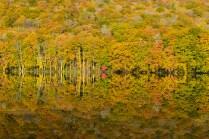 suirennuma_autumn