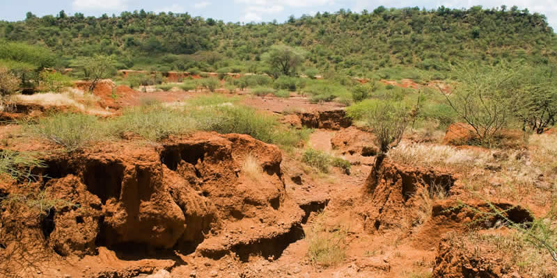 Effects Of Soil Erosion On Biodiversity Greentumble