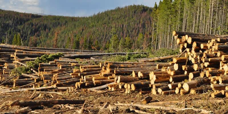 15 Strategies To Reduce Deforestation Greentumble