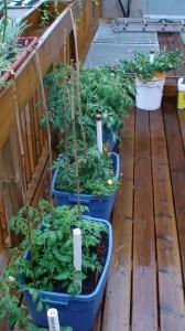 Self-watering totes on Volunteer Hamilton rooftop garden