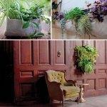 woolly garden plants