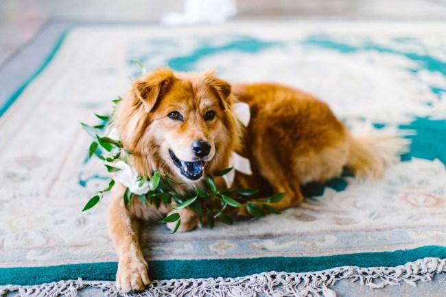 wedding pup