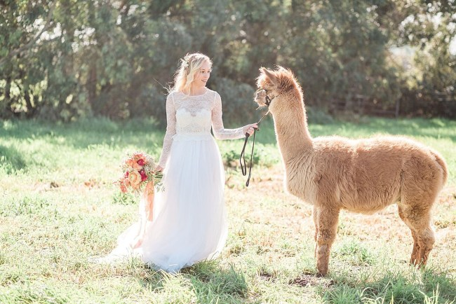 Romantic Boho Alpaca Inspiration