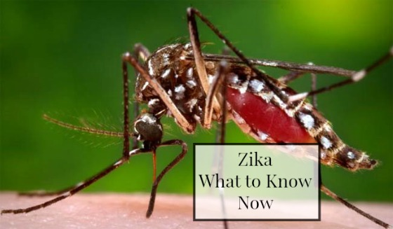 The zika environment now