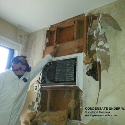 Mold Inspection Services Monmouth County NJ | GreenWorks