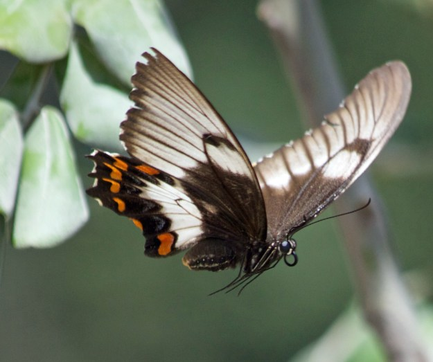 And to finish, a butterfly captured in flight. Do you know how hard that is to do?
