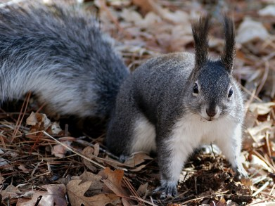 squirrel-80575_1920
