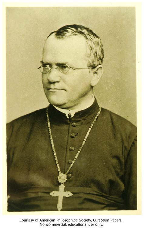 a biography of gregor mendel an augustinian monk Gregor mendel - (20 july 1822 – 6 january 1884) gregor johann mendel was a scientist, augustinian friar and abbot of st thomas' abbey in brno.